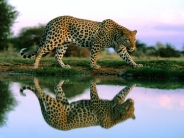 Spotted Reflections, Africa