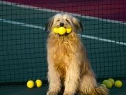 Tennis_Anyone