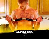 alpha_dog_wallpaper_1