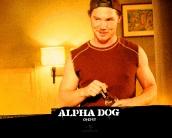 alpha_dog_wallpaper_10