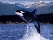 whale_wallpaper_1