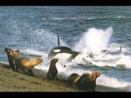 whale_wallpaper_10