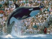 whale_wallpaper_11
