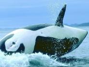 whale_wallpaper_13