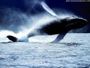 whale_wallpaper_15