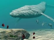 whale_wallpaper_18