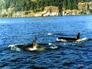 whale_wallpaper_2