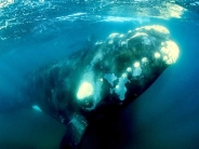 whale_wallpaper_23