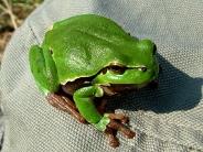 frog_wallpaper_10
