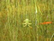 frog_wallpaper_11