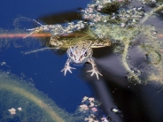 frog_wallpaper_12