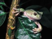 frog_wallpaper_13