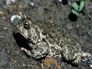 frog_wallpaper_14