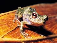frog_wallpaper_19