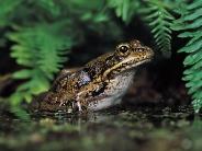 frog_wallpaper_24