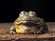 frog_wallpaper_25