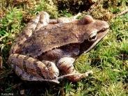 frog_wallpaper_26