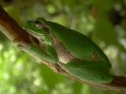 frog_wallpaper_28