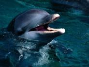 dolphin_wallpaper_10