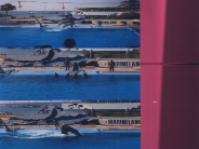 dolphin_wallpaper_11