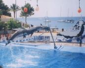 dolphin_wallpaper_12