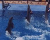 dolphin_wallpaper_15