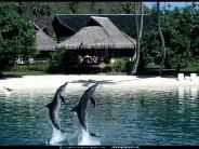 dolphin_wallpaper_18