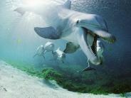 dolphin_wallpaper_2