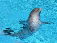 dolphin_wallpaper_22