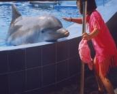 dolphin_wallpaper_24