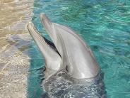 dolphin_wallpaper_28
