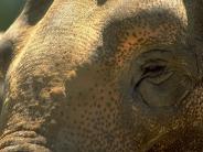 elephant_wallpaper_1
