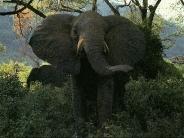 elephant_wallpaper_12