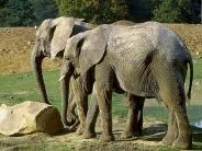 elephant_wallpaper_13
