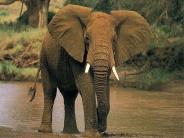 elephant_wallpaper_16