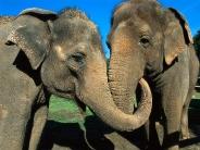 elephant_wallpaper_2