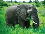 elephant_wallpaper_20