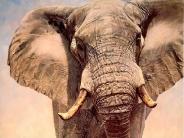elephant_wallpaper_21