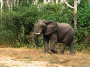 elephant_wallpaper_22