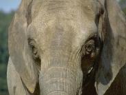 elephant_wallpaper_24