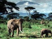elephant_wallpaper_25