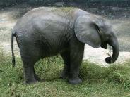 elephant_wallpaper_27