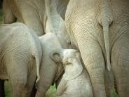 elephant_wallpaper_28