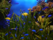fish_wallpaper_41