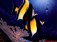fish_wallpaper_46