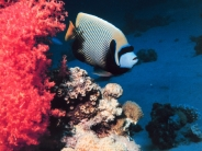 fish_wallpaper_48