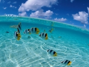 fish_wallpaper_58