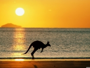 kangaroos_wallpaper_10