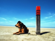 dog_wallpaper_112