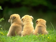 dog_wallpaper_120